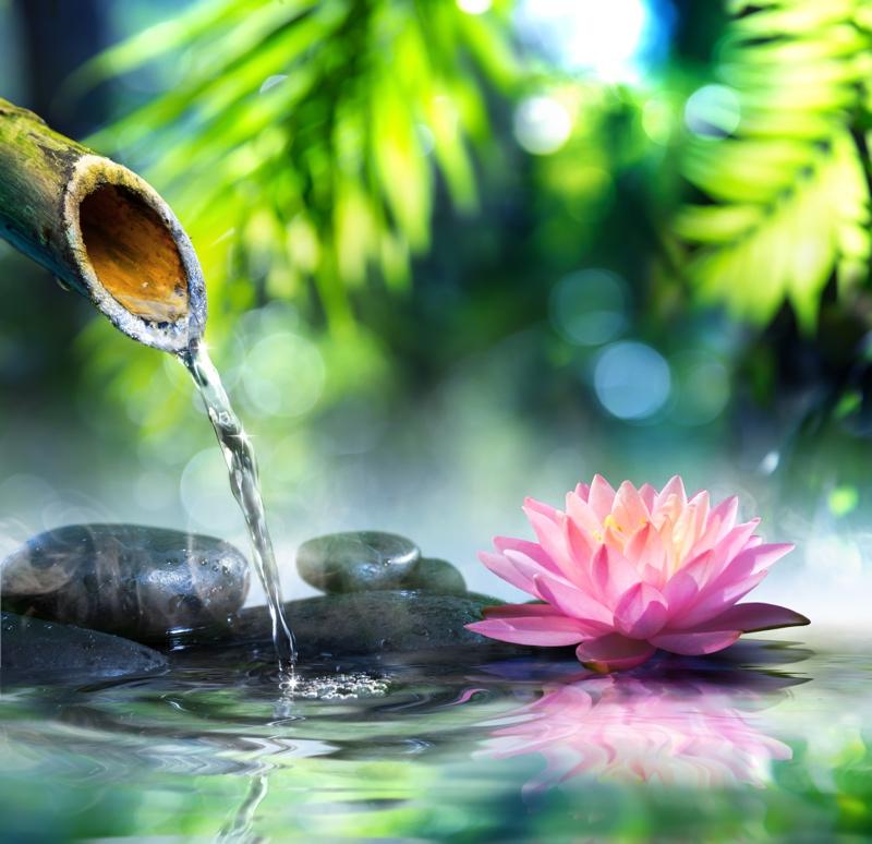 Hvordan lykkes med vannliljer
